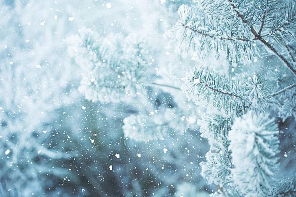 Winter+Break+Bucket+List
